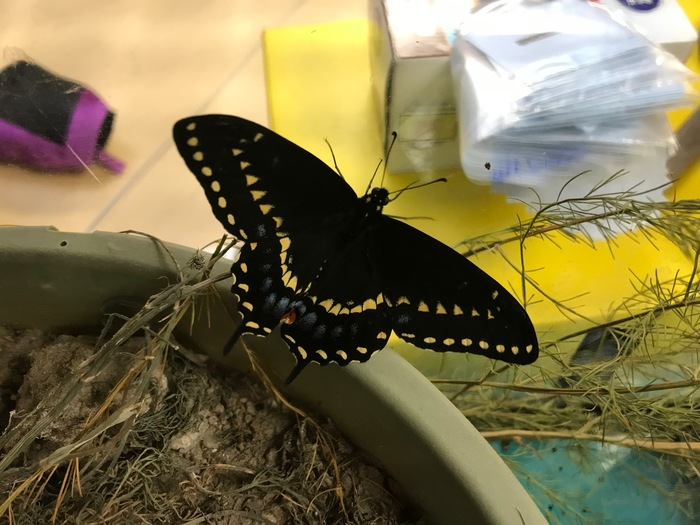 A beautiful new butterfly!