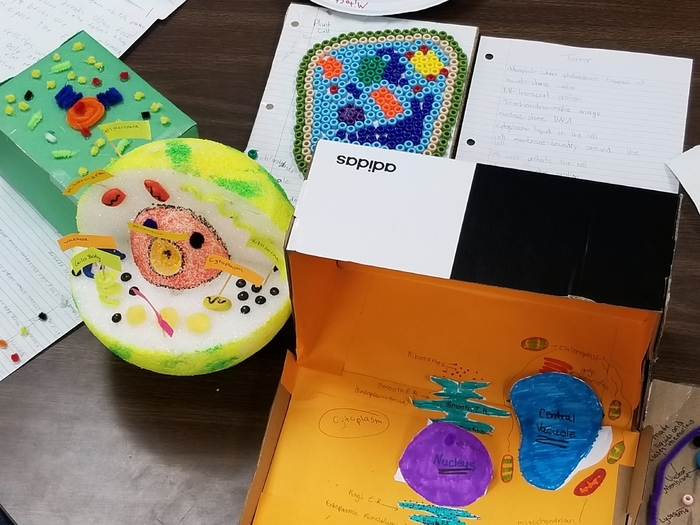 Cell models 3